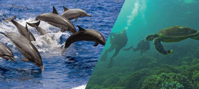 Dolphin watching & Snorkeling Combined tour – Muscat Tours