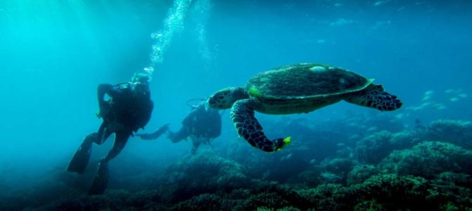 Snorkeling at Muscat – Muscat Tours
